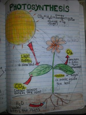 Photosynthesis | Travis 4th grade science journal