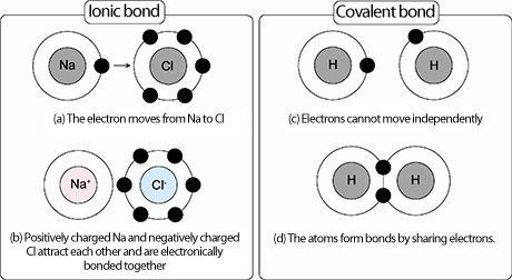 Best 25+ Covalent bond ideas on Pinterest