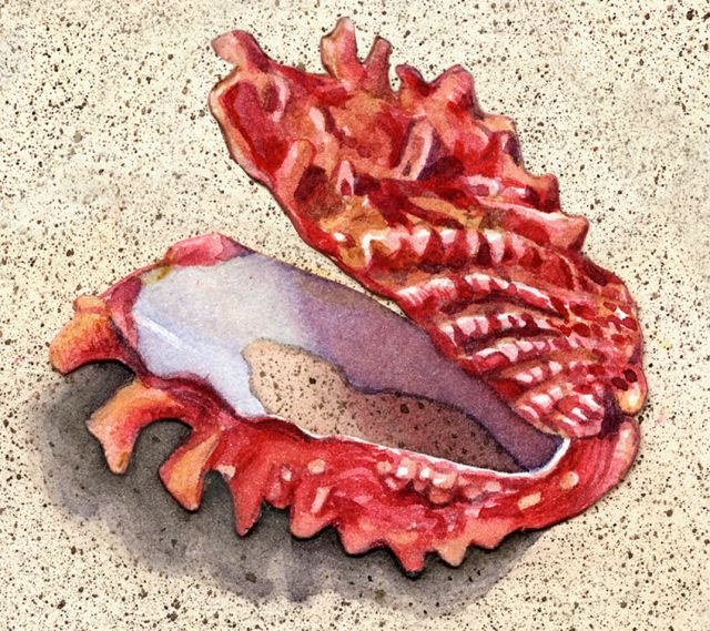 Sea Shell Painting  by Judy Unger  Aquatic art