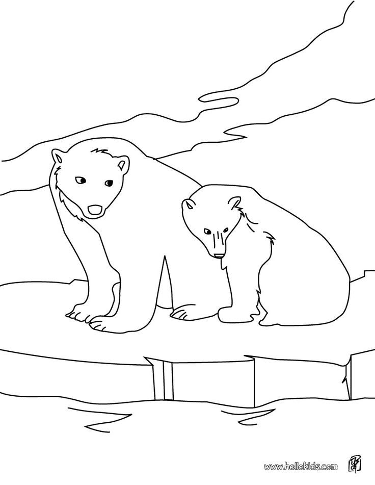 Polar bears, Arctic animals and Coloring pages on Pinterest