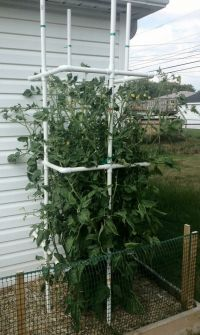 diy tomato plant cage from pvc pipe-rebar inside 4 corners ...