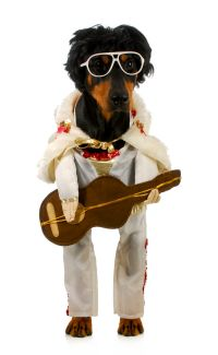#dog #costume | Rockin' Animals  | Pinterest | Halloween ...