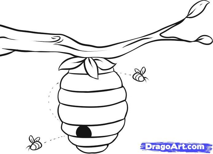 http://imgs.steps.dragoart.com/how-to-draw-a-beehive-step