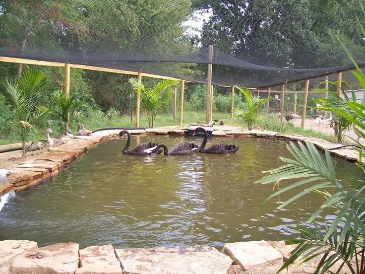 Farm Pond Duck Hunting