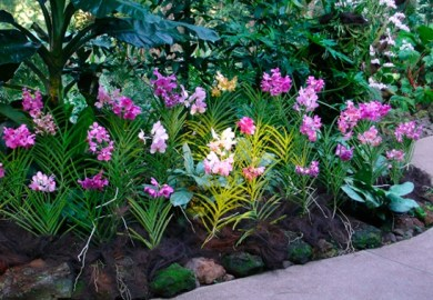 Orchid Care On Pinterest Orchids Orchids Garden And