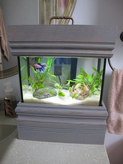 59 best Aquarium images on Pinterest