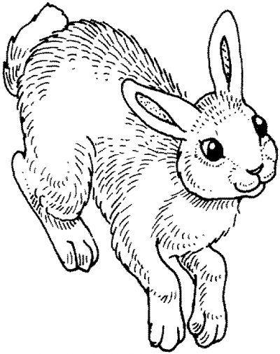 10 best images about conejos imprimir, colorear, pintar