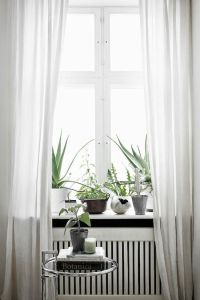 17 Best images about Trends 2015 - 2016 flower / plant ...