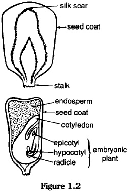 20 best images about Apologia Botany ~ Seeds Chapter 2 on