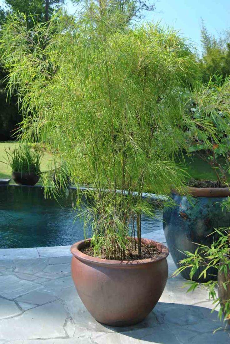 Ein Kubel In Mediterranem Stil Mit Bambus