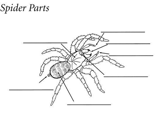 Large quiz like printout on invertebrates. Great resource
