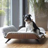 17 Best images about Dog on Pinterest | Home, Dog beds and ...