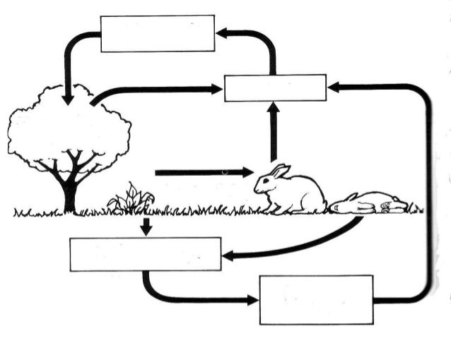 1000+ ideas about Carbon Dioxide Cycle on Pinterest