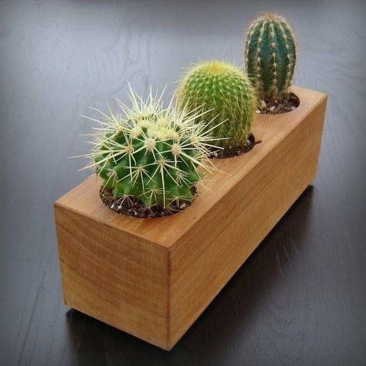 52 Best Images About Gardening Cactus & Succulents On Pinterest