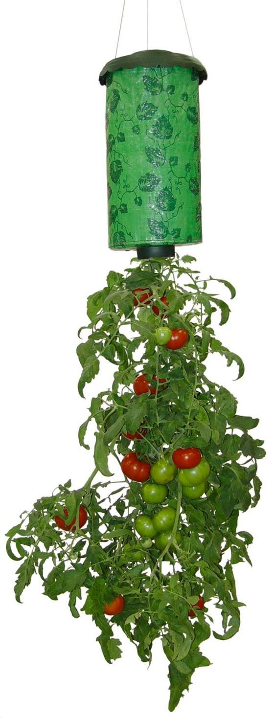 25 Best Ideas About Upside Down Tomato Planter On Pinterest