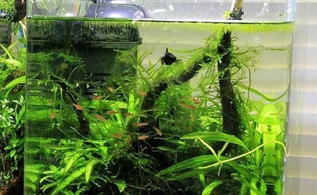 Low Tech Aquascape With A School Of Boraras Aquascapes
