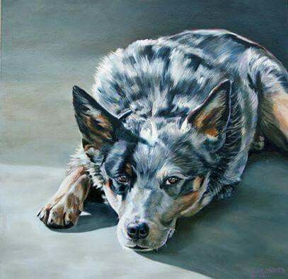 399 Best Images About Australian Cattle Dogs On Pinterest