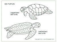 Apologia Swimming Creatures (Lesson 4) Sea Turtles