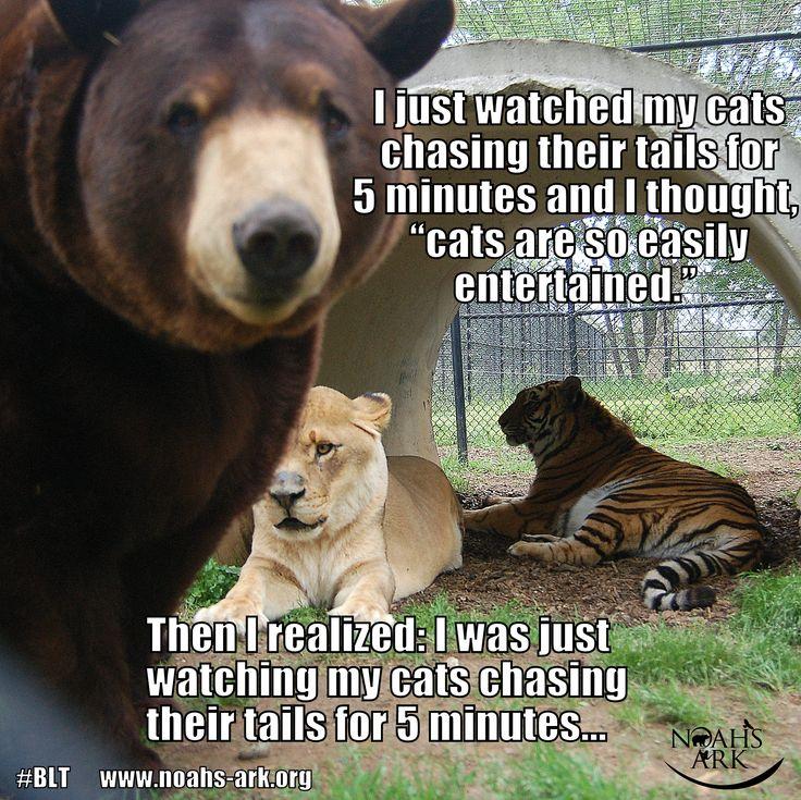Blt Lion Tiger Bear Bffs Wwwnoahs Arkorg LOL Meme