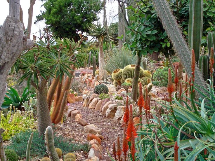 17 Best Images About South African Gardens On Pinterest Gardens