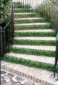 outdoor stairs...creeping fig | ck birds and bees and ...
