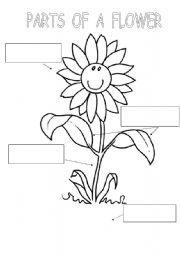 2510 best images about plants on Pinterest