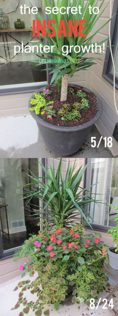 The secret to insane planter growth. One ingredient for impressive plants – so easy!