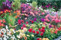 42 best images about Dahlia Gardens on Pinterest | Gardens ...