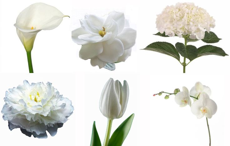 78+ Ideas About White Flowers Names On Pinterest