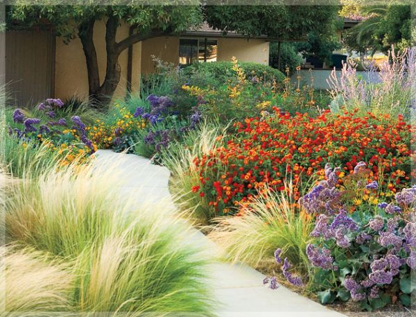 drought tolerant plants northern