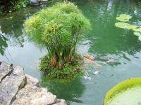 "Dtails sur 24"" Floating Island Pond Planter-plant-koi ..."