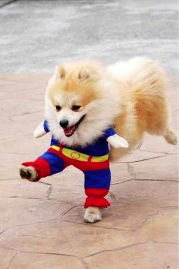 superman dog costume – This is one of the funniest I have seen.