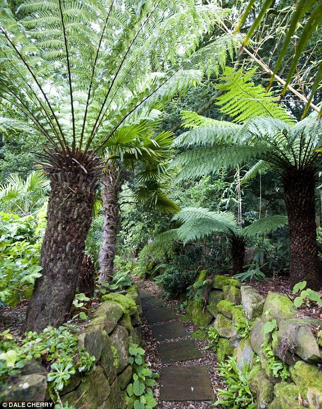 25 Best Ideas About Ferns Garden On Pinterest Shade Garden