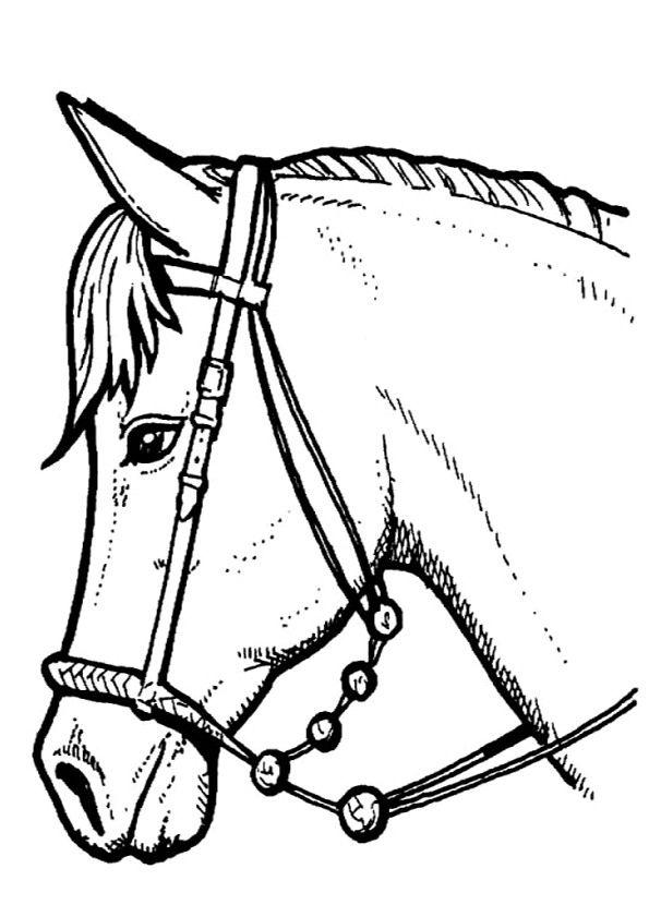 29 best ideas about paardenkampje kleuters on Pinterest