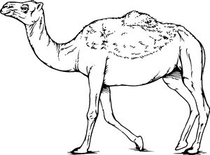 291 best Dromedary Camel Designs images on Pinterest