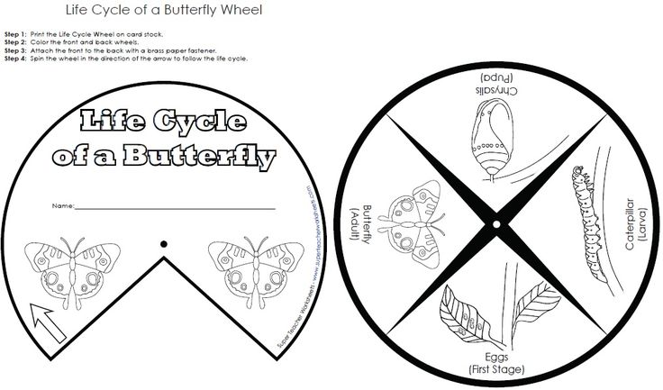 Make this butterfly life cycle wheel to teach kids about