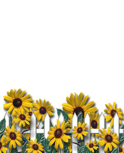 1000 clipart sunflowers