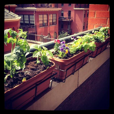 78 ideas about Balcony Herb Gardens on Pinterest  Apartment gardening Balcony garden and