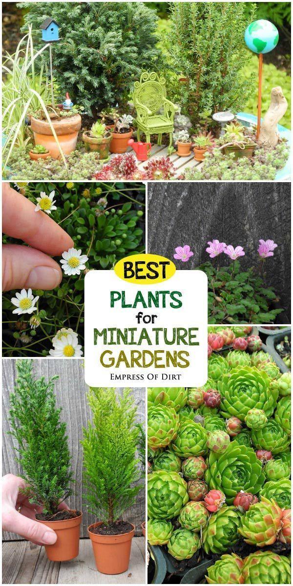 25 Best Ideas About Miniature Gardens On Pinterest Fairy Houses