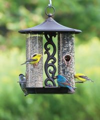250 best images about Bird Feeding on Pinterest | Wild ...