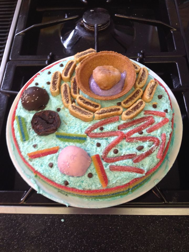 plant cell diagram project how to make a in word edible cake cakepins.com | kids school projects pinterest animal cell, animals and cakes