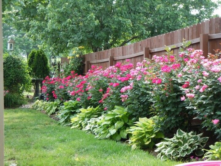 25 Best Ideas About Privacy Fence Landscaping On Pinterest