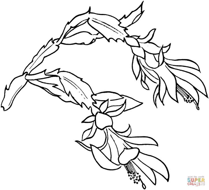 Free Zinnia Flower Coloring Pages Sketch Coloring Page