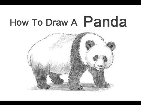 17 Best images about Drawings /Sketches on Pinterest