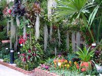 Tropical garden with beautiful bromeliads | GARDEN ...