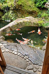 1000+ ideas about Fish Ponds on Pinterest | Ponds, Koi ...