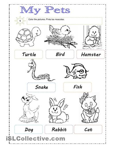 33 best images about Pet Worksheets on Pinterest