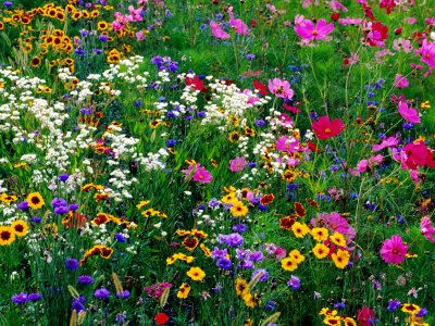 25 Best Ideas About Wild Flower Gardens On Pinterest Wild