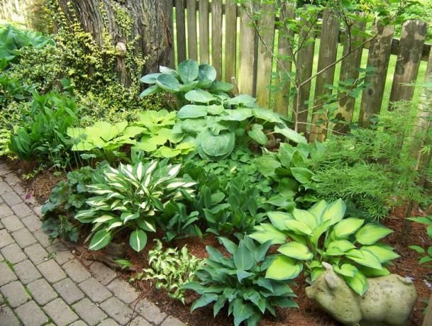 Gardening Hosta A Collection Of Other Ideas To Try Soil Type