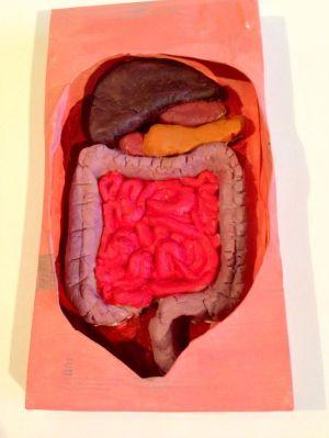The digestive system  cardboard and play dough wwwdaddydaddycool | Cardboard Projects